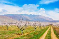 Azienda agricola dell'albicocca durante la stagione sping contro la catena montuosa di Vayk, provincia di Vayots Dzor, Armenia Fotografie Stock