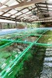 Azienda agricola dell'alga Immagini Stock