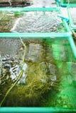 Azienda agricola dell'alga Immagine Stock Libera da Diritti