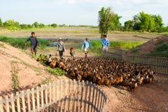 Azienda agricola dell'anatra Immagine Stock Libera da Diritti