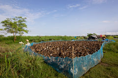 Azienda agricola dell'anatra Immagini Stock Libere da Diritti