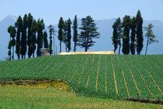 Azienda agricola dell'azienda agricola fushoushan, Taiwan del cavolo Fotografia Stock Libera da Diritti