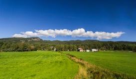 Azienda agricola dell'erba Fotografia Stock Libera da Diritti
