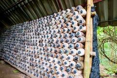 Azienda agricola dell'interno del fungo Fotografia Stock Libera da Diritti