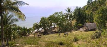 Azienda agricola dell'isola fotografie stock