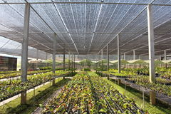 Azienda agricola dell'orchidea Fotografia Stock Libera da Diritti
