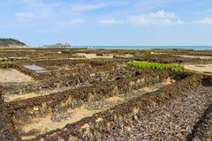 Azienda agricola dell'ostrica di Cancale Immagini Stock Libere da Diritti
