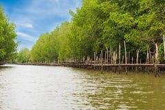 Azienda agricola dell'ostrica nell'area della foresta della mangrovia a Chanthaburi, Tailandia Uno di migliore attrazione turisti immagine stock libera da diritti