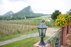 Azienda agricola dell'uva della priorità alta della lampada Fotografie Stock