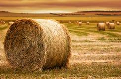 Azienda agricola della balla di fieno Immagine Stock