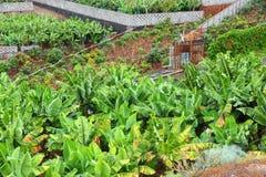 Azienda agricola della banana Immagini Stock Libere da Diritti