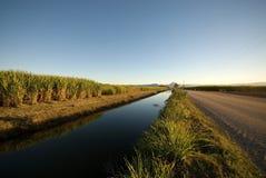 Azienda agricola della canna da zucchero Immagini Stock Libere da Diritti