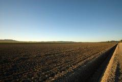 Azienda agricola della canna da zucchero Fotografia Stock