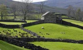 Azienda agricola della collina North Yorkshire - in Inghilterra Immagini Stock
