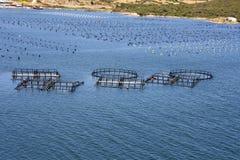Azienda agricola della cozza e del pesce Fotografia Stock Libera da Diritti
