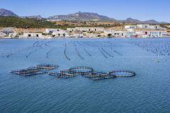 Azienda agricola della cozza e del pesce Fotografie Stock Libere da Diritti