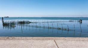 Azienda agricola della cozza nella laguna veneziana Fotografia Stock