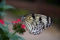 Azienda agricola della farfalla di Pili Palas Fotografia Stock