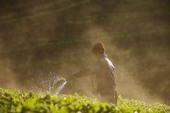 Azienda agricola della fragola Fotografia Stock Libera da Diritti