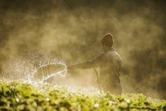 Azienda agricola della fragola Fotografie Stock Libere da Diritti