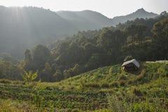 Azienda agricola della fragola e poca capanna sulla collina Fotografie Stock