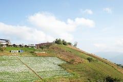 Azienda agricola della fragola nel nordico della Tailandia, paesaggio dell'azienda agricola della fragola in Tailandia Fotografie Stock Libere da Diritti