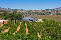 Azienda agricola della frutta sul plateau della montagna Immagine Stock