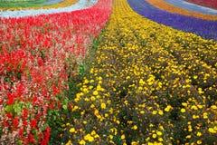 Azienda agricola della lavanda nell'Hokkaido, Giappone Immagine Stock Libera da Diritti