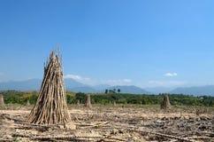 Azienda agricola della manioca in campagna della Tailandia Immagini Stock