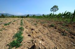 Azienda agricola della manioca in campagna della Tailandia Fotografia Stock Libera da Diritti