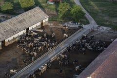 Azienda agricola della mucca Immagine Stock Libera da Diritti