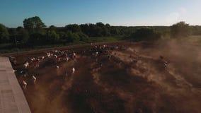 Azienda agricola della mucca da sopra video d archivio