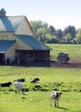 Azienda agricola della mucca in Maryland Immagini Stock Libere da Diritti