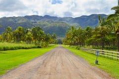 Azienda agricola della noce di cocco della palma dell'Hawai Fotografia Stock Libera da Diritti