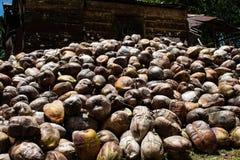 Azienda agricola della noce di cocco nella Repubblica dominicana: montagna delle noci di cocco fotografia stock libera da diritti