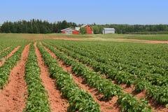 Azienda agricola della patata dell'isola Principe Eduardo Fotografie Stock