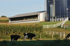 Azienda agricola della Pensilvania con le mucche da latte Fotografie Stock Libere da Diritti