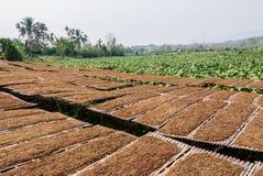 Azienda agricola della piantagione del tabacco in Tailandia Immagini Stock Libere da Diritti