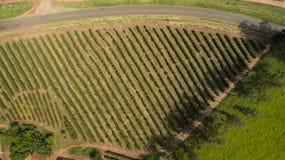 Azienda agricola della piantagione di caffè all'interno del Brasile Immagini Stock Libere da Diritti