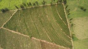 Azienda agricola della piantagione di caffè all'interno del Brasile Immagine Stock Libera da Diritti