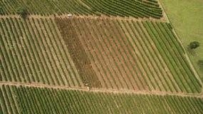 Azienda agricola della piantagione di caffè all'interno del Brasile Fotografia Stock Libera da Diritti