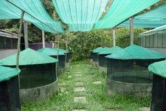 Azienda agricola della rana Fotografia Stock Libera da Diritti
