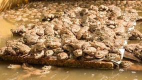 Azienda agricola della rana in stagno Immagine Stock Libera da Diritti