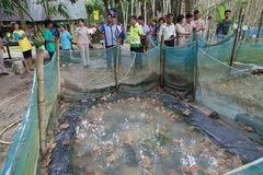 Azienda agricola della rana in Trang, Tailandia Fotografia Stock Libera da Diritti
