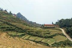 Azienda agricola della scala a libretto sulla collina con la fattoria di estate di mattina nel PA del Sa, Vietnam Fotografie Stock