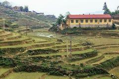 Azienda agricola della scala a libretto sulla collina con la fattoria di estate di mattina nel PA del Sa, Vietnam Immagini Stock Libere da Diritti