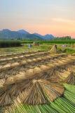 Azienda agricola della stuoia della risaia di agricoltura a tempo la mattina a MaeSai, Chiangrai Immagine Stock