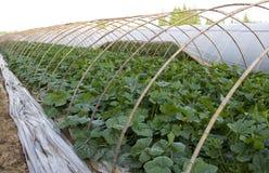 Azienda agricola della tenda di agricoltura Fotografie Stock Libere da Diritti