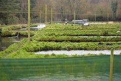 Azienda agricola della trota Fotografia Stock