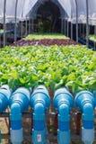 Azienda agricola della verdura di coltura idroponica Fotografia Stock